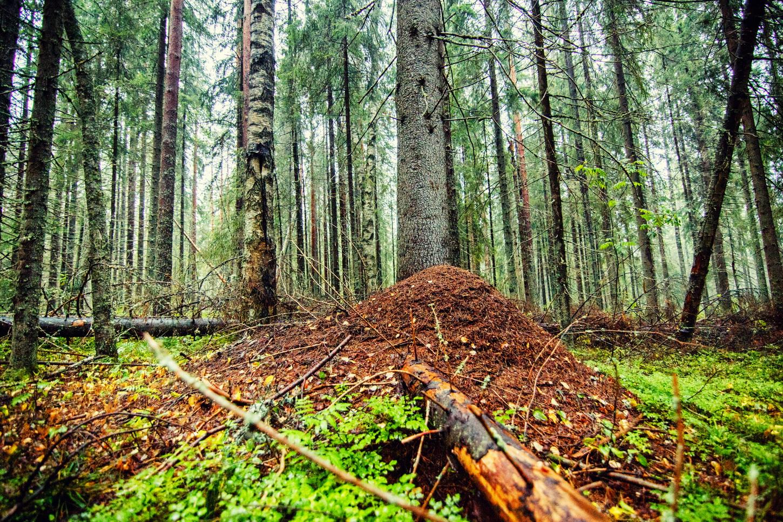 форму муравейник в лесу картинки соцсетях появились